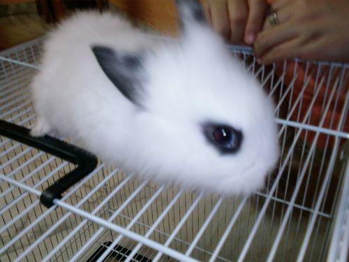 Zoe's bunny love